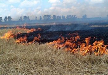 Поджог сухой травы и листьев карается штрафом