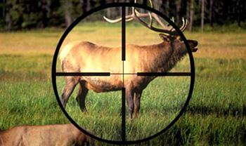 В Украине существенно увеличили штрафы для браконьеров